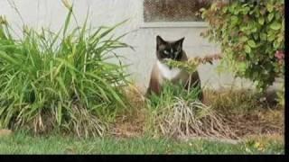 Dusty, el gato ladrón
