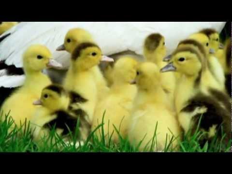 Video** 2012-1-50 ***INTERNATIONAL CHILDREN'S DAY 2012*** June 1-st Music: