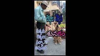 లెక్కలు నేర్చిన కుక్క, Amazing dog knows mathematics, Dog does maths, very smart dog, dog answers fo