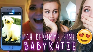 ÜBER BABYKATZEN & KOFFERWEISE Make Up!