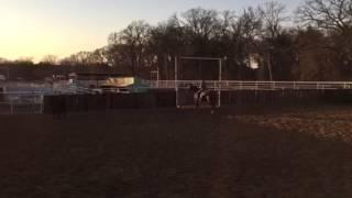 CoCo- Jared Lesh Cowhorses