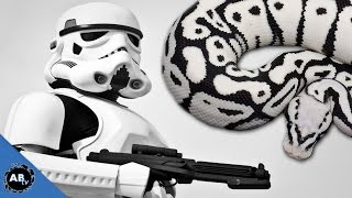 download lagu Insane Star Wars Snake Ep.425 : Snakebytestv : Animalbytestv gratis