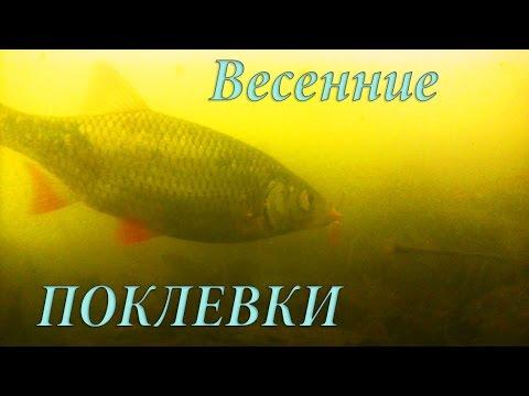 Весенние ПОКЛЕВКИ на поплавочную удочку (проба на донку). Рыбалка. Подводная съемка. Fishing