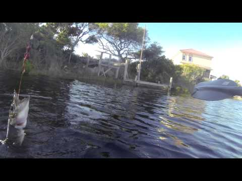 Kayak Bass And Gator Fishing
