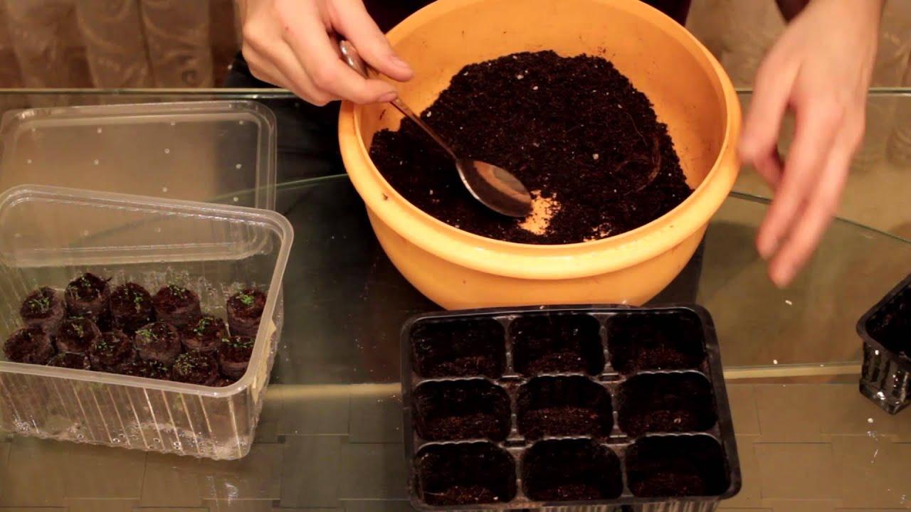 Выращивание лобелии из семян. Посадка и уход в домашних условиях 66