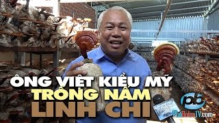 Ông Việt Kiều Mỹ về quê trồng nấm Linh Chi hiệu Ông Tiên
