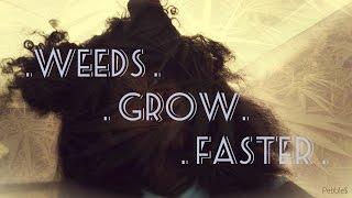 Draft #1| Weeds Grow Faster