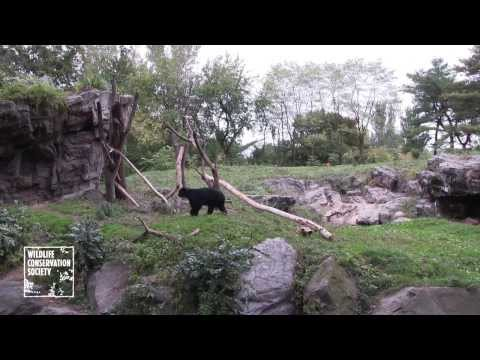 WCS Queens Zoo Welcomes a New Andean Bear