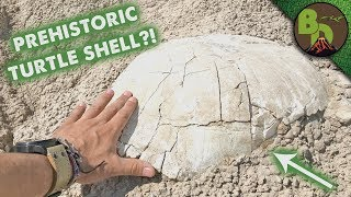 Unearthing a Prehistoric Turtle!