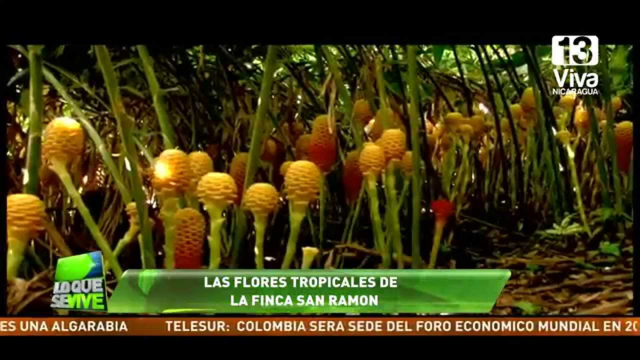 Producci n de flores tropicales youtube - Flores tropicales fotos ...