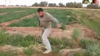 صيد الحسون على الطريقة السورية
