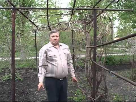Технология выращивания винограда - Николай Сергеев