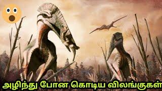 Extinct animals in the world part 1  அழிந்து மறைந்து விட்ட விலங்குகள்