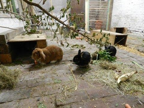 wie oft mistet man den kaninchenstall aus kaninchenhaltung gehege kaninchen lustig s hase. Black Bedroom Furniture Sets. Home Design Ideas