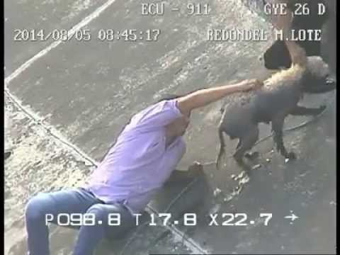 Rescate de perro atrapado | Ecuador | ECU 911