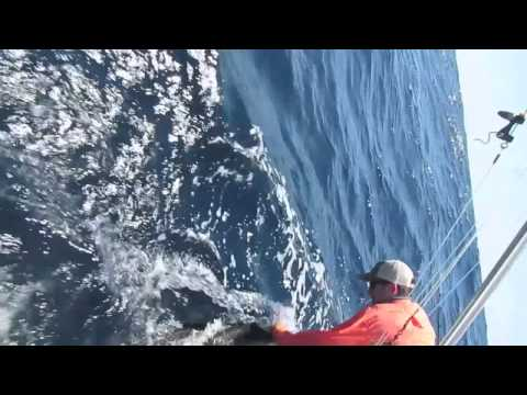Sailfish on Sea Angel with Capt. Mike Webb in Guatemala