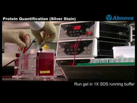 quantification of proteins in solution by Protein quantification and detection methods 1) spectroscopic procedures  this assay (a 280) can be used to quantitate solutions with protein concentrations of 20 .