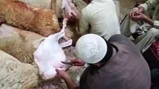 How to halal dumba in peshawar ?