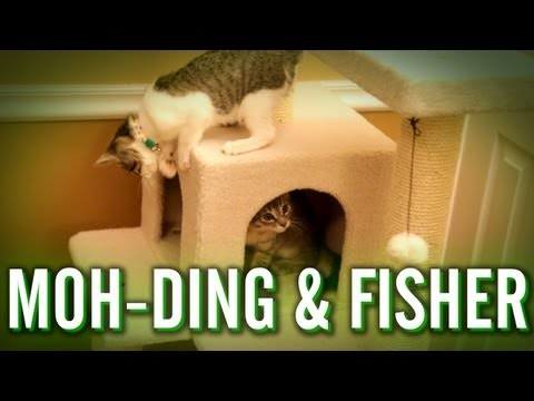 Moh-Ding & Fisher's Playdate
