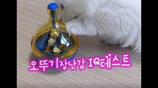 장난감으로 IQ테스트! 고양이집사 브이로그(VLOG) 귀여운고양이동영상