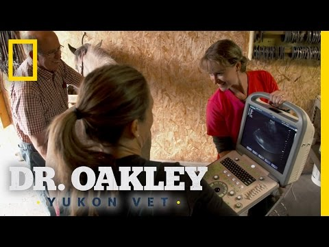 Double Horse Mother's-To-Be | Dr. Oakley, Yukon Vet