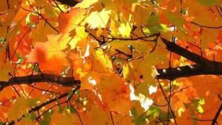 Watch Riblja Corba Gluposti video