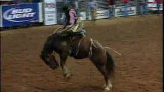 Saddle Bronc Riding | HRS Rodeo