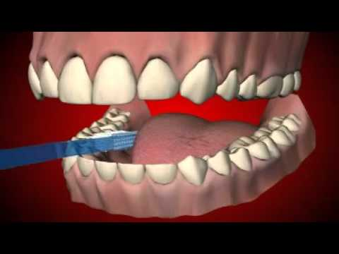 How to brush your teeth? Learn in 4 simple steps!