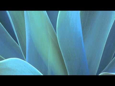 Henok Addis New Song video