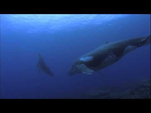 Ocean Odyssey 2010 720p part 4 (HD)