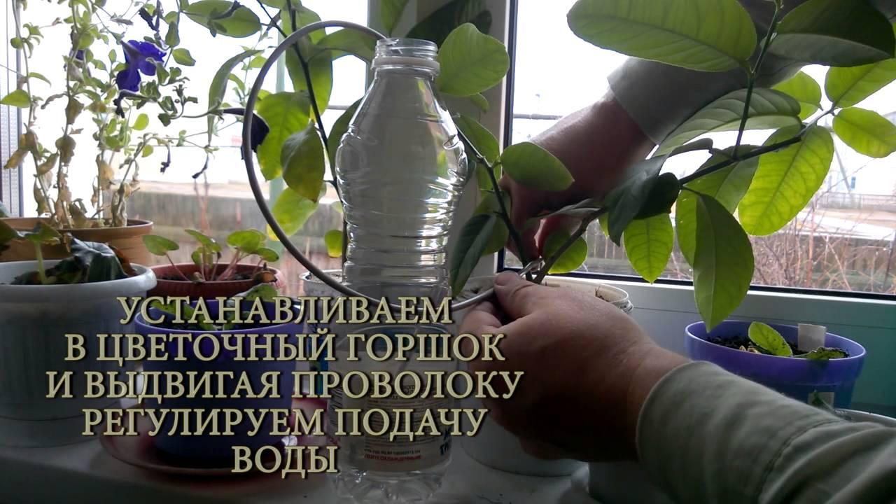 Капельный полив из капельницы для комнатных цветов