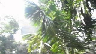 Sat Swarup video