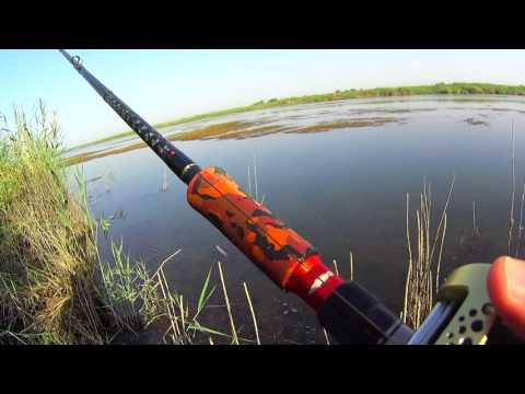 балхаш ловля змееголова видео