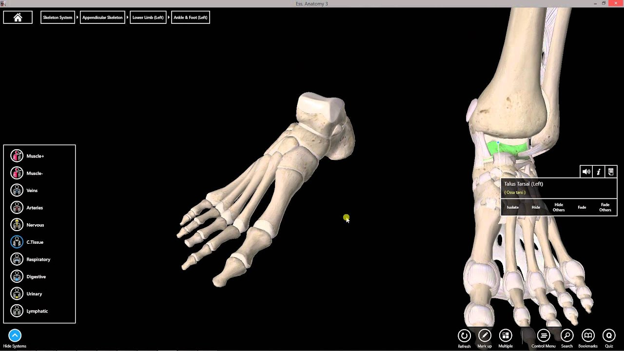 Left ankle - irosh.info