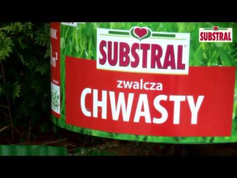 Substral - Jak zwalczyć chwasty na trawniku?
