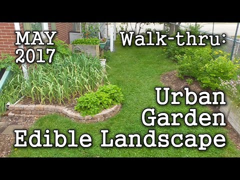 2017 May Urban Garden, Edible Landscaping -  Albopepper Memorial Weekend Walk-through Tour