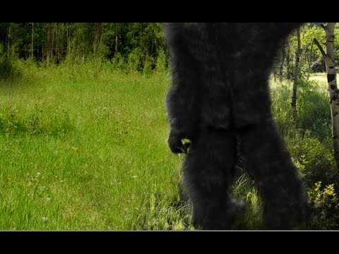 Homo Sapiens Are Not The Only Apes Walking On Two Legs