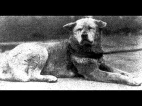 Hachiko Real Story video