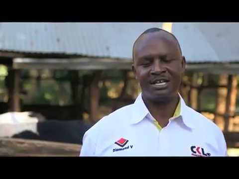 Shamba Shape Up (Swahili) - Chickens, Family Nutrition, Dairy Cows