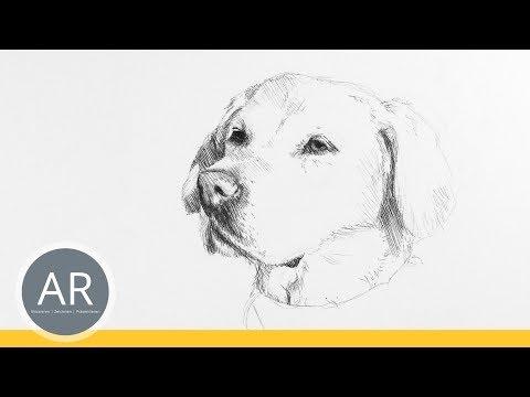 Hunde-Porträts zeichnen lernen. Tiere zeichnen. Mappenkurs Kommunikationsdesign