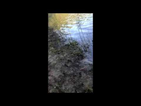 Fishing report - Some Swim Jig Bass & Pix July 2012 (TeamRippnLipz1) Video