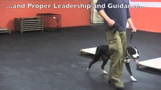 Solid K9 Training Stories - Meaghan and Tyson