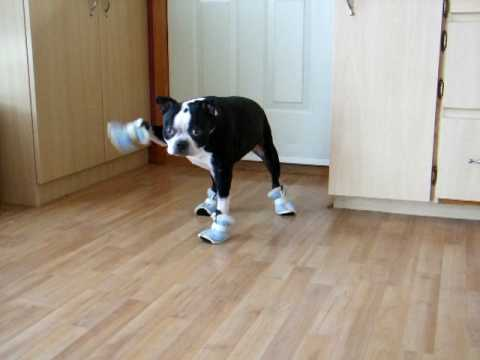 Make Dog Boots Out Of Socks