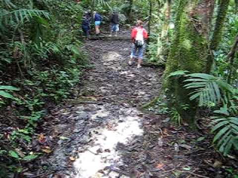 Group in the forest of Kinabalu National Park, Sabah, Borneo