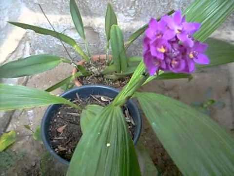 minha coleção de orquideas 2011