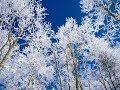 Ой зима наша зимонька Караоке mp3