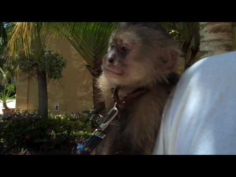 Hanging Out With Mookey The Monkey - Elite Travel & Events Inc.  - Http://elitete.com