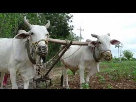 KAUNE KHONTWA MEIN LUKAYILU  - ORIGINAL VOICE OF GREAT MOHAMMAD KHALEEL