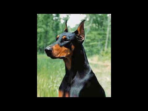 Top 10 - Los Mejores Perros Guardianes