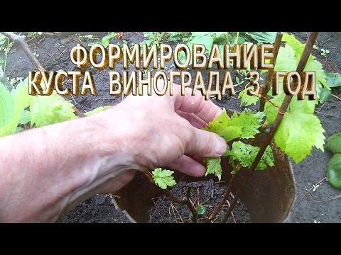 Как формировать виноградную лозу в первый, второй и третий год выращивания.